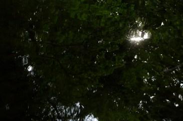 bushy_water_17-06-03_05_sec_seq_2_498_low