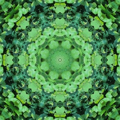 plant mandala 5