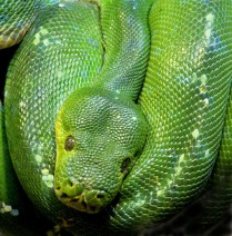 HM 28 DN Green Mamba Jerry Harders