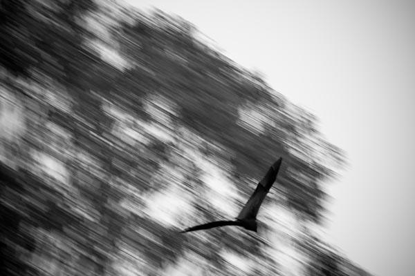 Bat flying through the trees. ISO 1250, 200mm, 1/50 sec, F2.8.