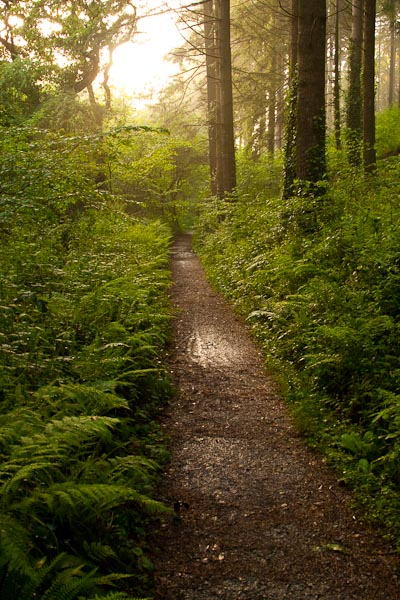 Taken in Cornwall in May 2008 in a forest that contained the lodges we were staying at. Taken at ISO 1250, 1/30 sec, F6.3.