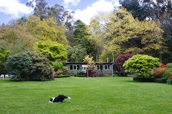 This is where we had tea and scones. Lovely garden...