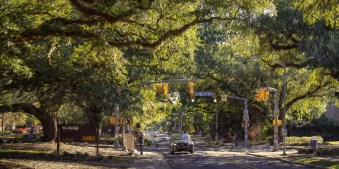 LSU Tree Lined Streets
