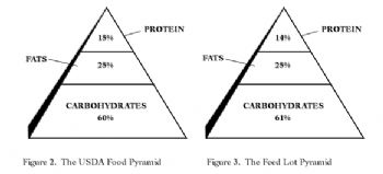 Food Pyramid Junk Science