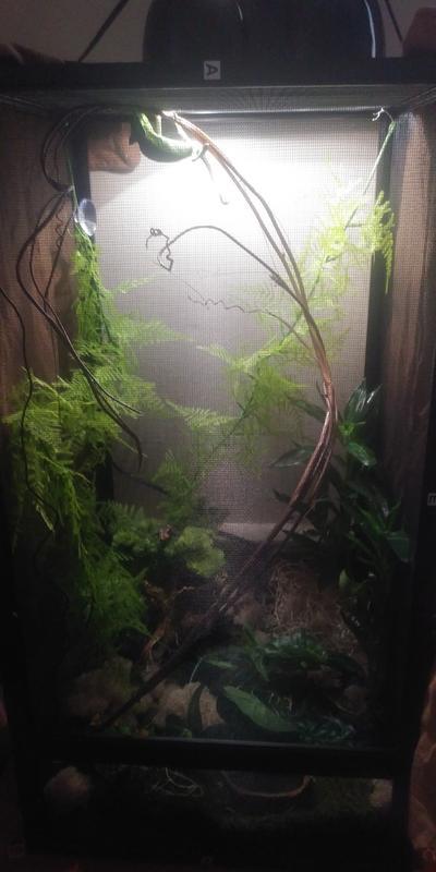 Petsmart Chameleon Cage : petsmart, chameleon, ReptiBreeze, Chameleon, Reptile, Terrariums, PetSmart