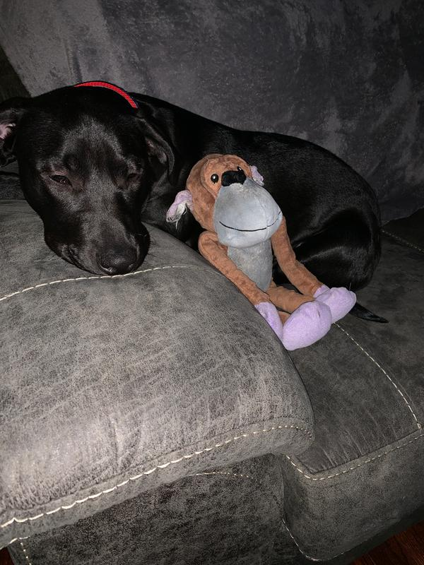 Top Paw Replacement Parts : replacement, parts, Paw®, Shield™, Protection, Monkey, Plush,, Squeaker, Plush, PetSmart