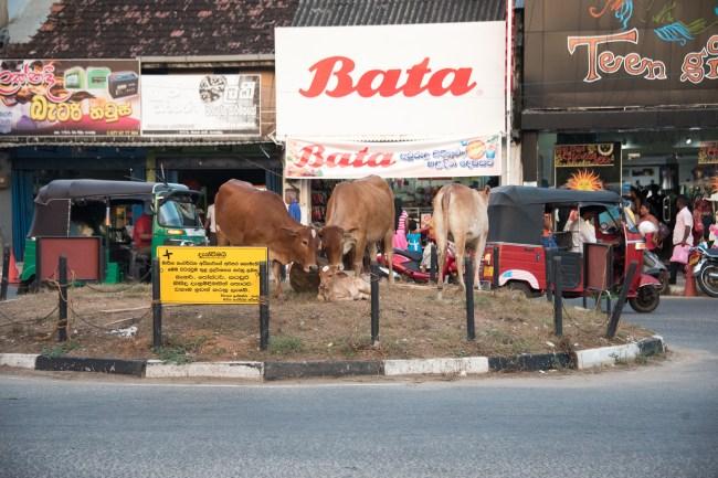 Kreisel mit Kühen