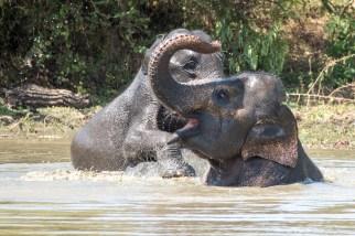Ein glücklicher Elefant