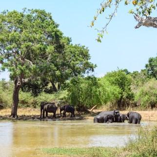 Elefantenherde bei der Abkühlung