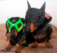 Dogs Batman and Robin Costumes