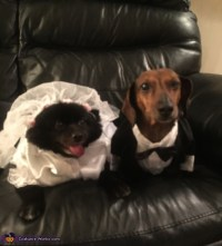Bride & Groom Dogs Costume