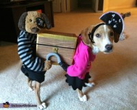 Pirates Carrying a Treasure Chest - Creative Costume for Dogs