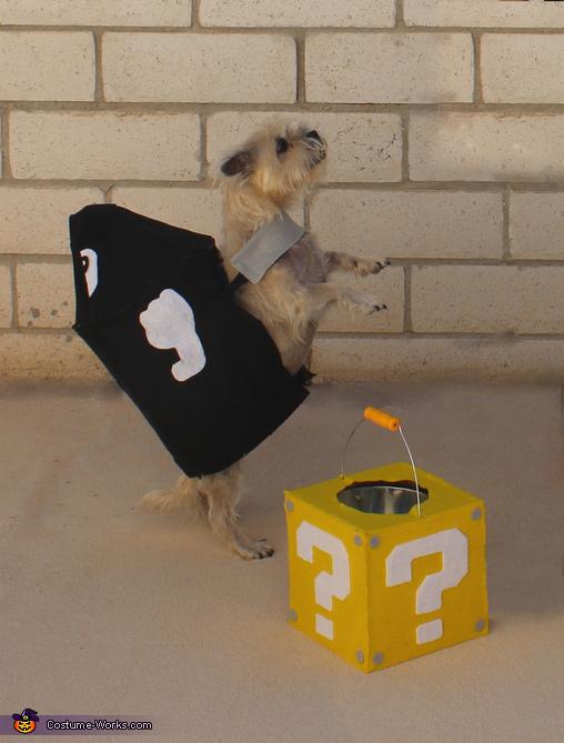 bullet bill dog s