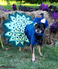 peacock dog peacock costume idea for dogs