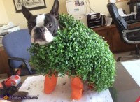 Chia Pet Dog's Costume