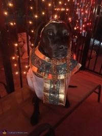 Cleopatra Dog Costume