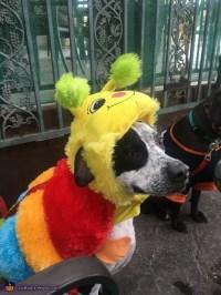 Cleopatra Dog Costume - Photo 2/2