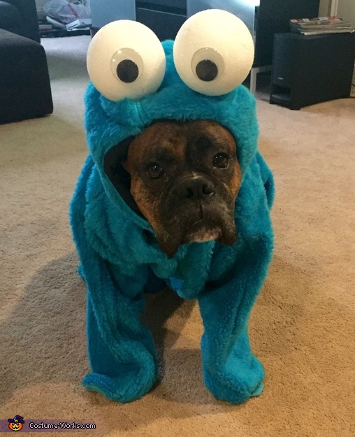 Cookie Monster Dog Costume
