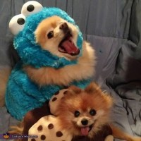 Cookie Monster & Cookie Dogs Costume