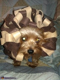 diy dog lion costume - Diy (Do It Your Self)