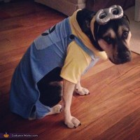 Despicable Me Minion - Halloween Costume for Dogs