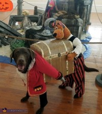 Dog Pirate Carrying Treasure Chest - DIY Costume for Dogs ...