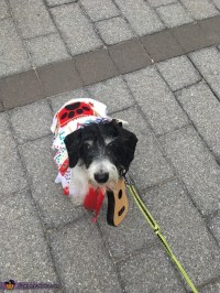 Elvis Dog Costume - Photo 7/8