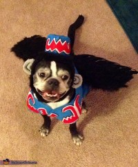Flying Monkey Costume for Dogs