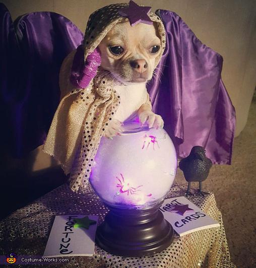 fortune teller gypsy dog