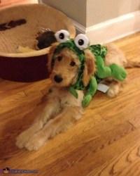 Frog Dog Costume