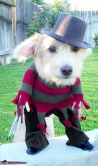 A Nightmare on Elm Street Freddy Krueger Costume for Dogs ...