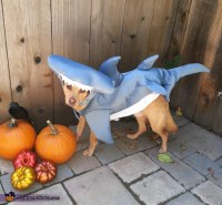 Hammerhead Shark Dog Costume