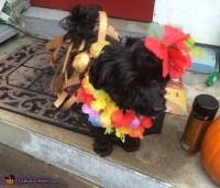 Hawaiian Dog Costume - Photo 3/4