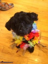 Hawaiian Dog Costume - Photo 4/4