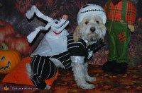 Jack Skellington Dog Costume