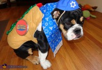 Kosher Dog Costume - Photo 5/5