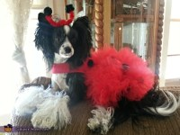 Ladybug Costume for Dogs