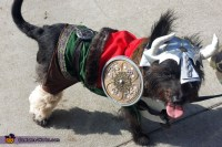 Leif Eriksson the Viking - Costume for Dogs