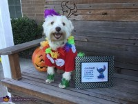Lilo & Stitch Dogs Costume - Photo 2/4