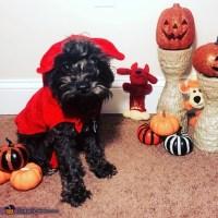 Little Devil Dog Halloween Costume