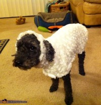 Little Lost Sheep - Costume for Dogs