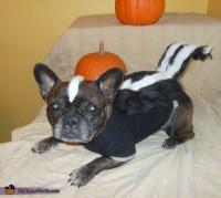 Dog Skunk Halloween Costumes | lil stinker skunk dog ...