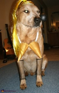 Madonna Halloween Costume for Pets