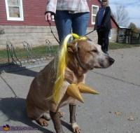 Madonna Halloween Costume for Pets - Photo 2/3