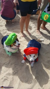 Mario and Luigi Dogs Costume - Photo 2/2