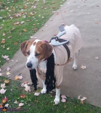 The Walking Dead Michonne Dog Costume