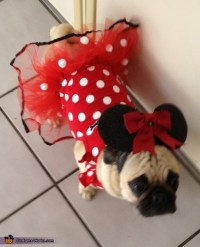 Homemade Minnie Mouse Costume for Dogs