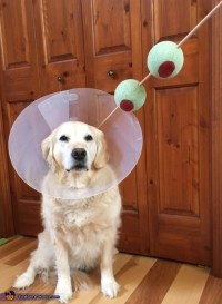 Molly the Martini Dog's Costume