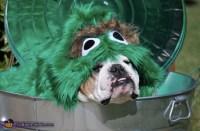 Oscar the Grouch Dogs Halloween Costume - Photo 2/3