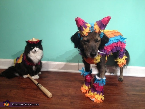 Party Animals  Costumes for Pets  Photo 23